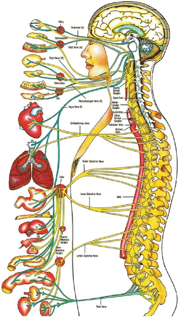 Chiropraktik Heilkunde - Naturheilkunde