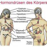 Hormon Saliva Hormondruesen des Koerpers 150x150 - Naturheilkunde