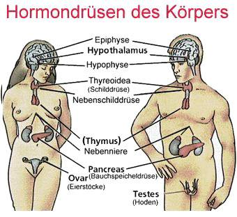 Hormon Saliva Hormondruesen des Koerpers - Naturheilkunde