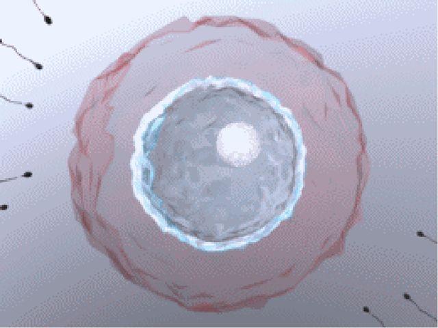 Kinderwunsch Befruchtung - Naturheilkunde
