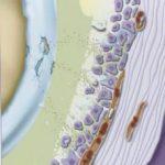 Knie Arthrose Hueftarthrose 150x150 - Naturheilkunde
