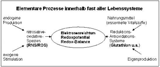 Nitrosativer Stress elementare Prozesse - Naturheilkunde