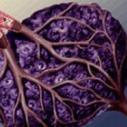 Prognosevorteil durch Tumor Oxygenisierung Heilpraktiker - Naturheilkunde