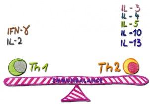 Th1 Th2 Immunbalance Immunologische Schwerpunktpraxis - Naturheilkunde