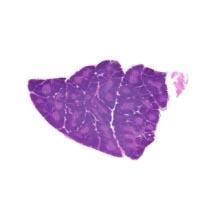 Thymus Immun Revitalisierung - Naturheilkunde