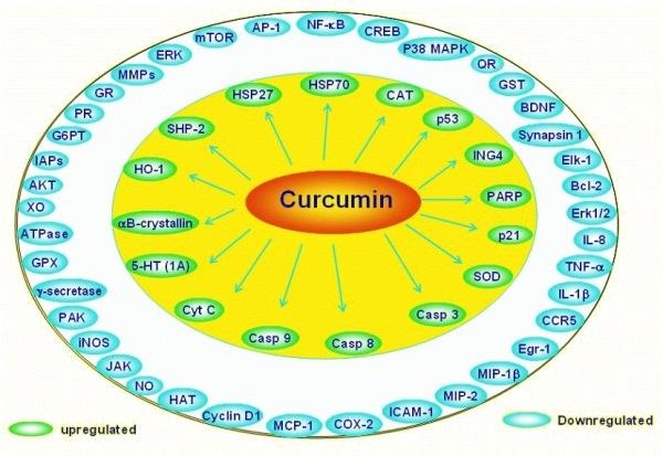 Wirkung CURCUMA - Naturheilkunde