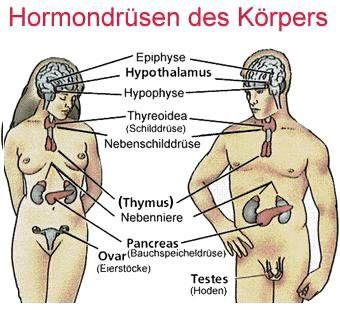 Hormon Saliva