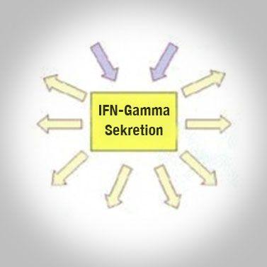 Interferon-(IFN)-Gamma