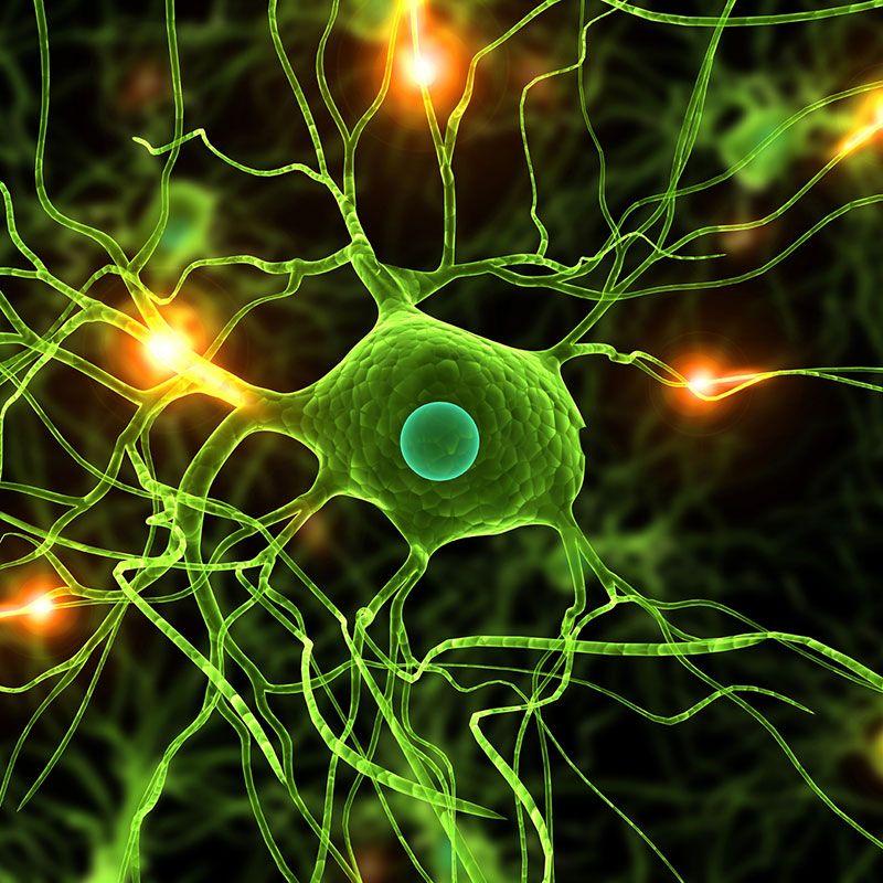 Multiple Sklerose (MS) und Epstein-Barr Virus (EBV)