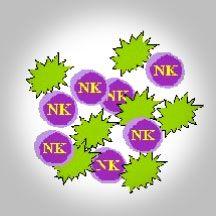 Natürliche Killerzellen: Der Funktionstest