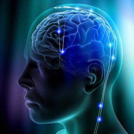 Toxoplasmose: Verändert ein Parasit das menschliche Wesen?