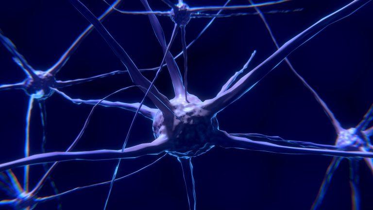 nerve cell 2213009 1920 768x432 - Naturheilkunde